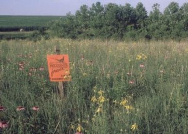 Brown County Pheasants Forever - Habitat Page