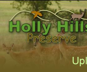 Holly Hills Preserve