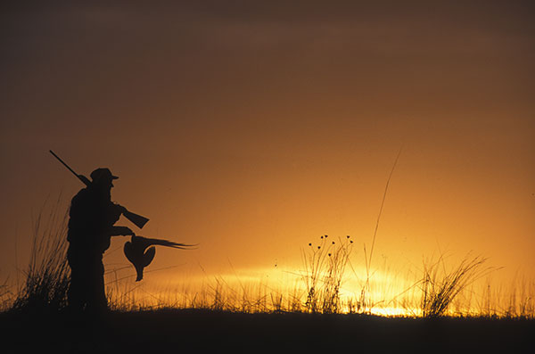 About Golden Prairie Pheasants Forever