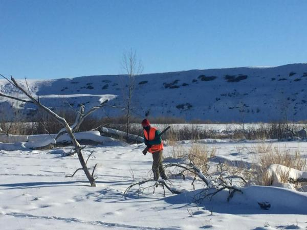 Mark Studt braving the cold to find the roosters on the Teton River property