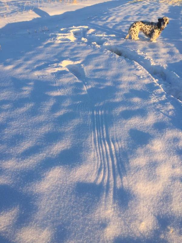Rooster tracks on the Teton River Property
