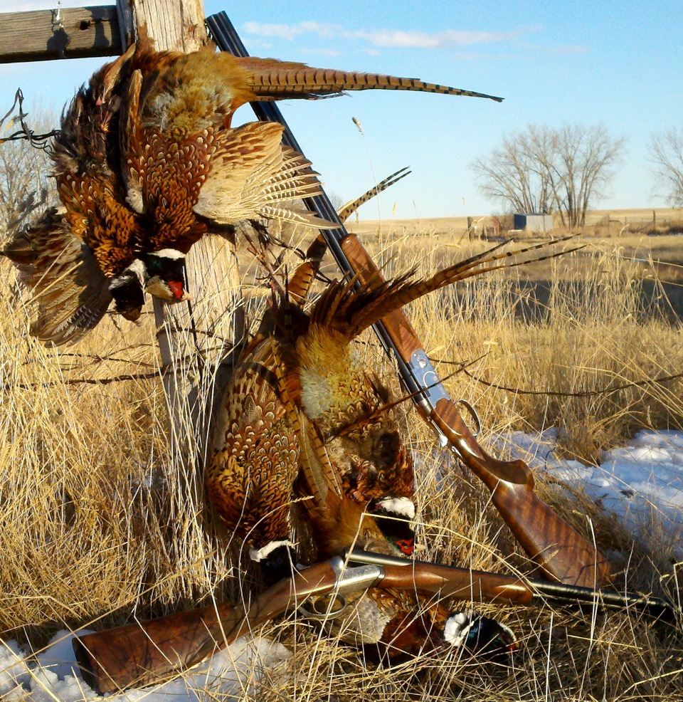 Pat Howe with a limit of pheasants from Central Montana