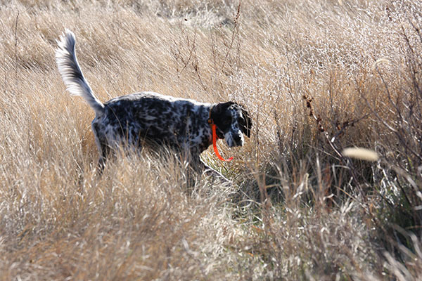 High Plains Pheasants Forever - Banquet Page