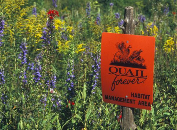 Llano Estacado Chapter of Quail Forever - Habitat Page