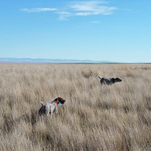 Flathead Valley Rick Smith Dog Training Seminar