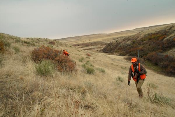 Our Wolf Creek property will be pheasant country now and for future pheasant hunters