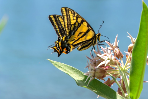 Why Pollinators are Important To You