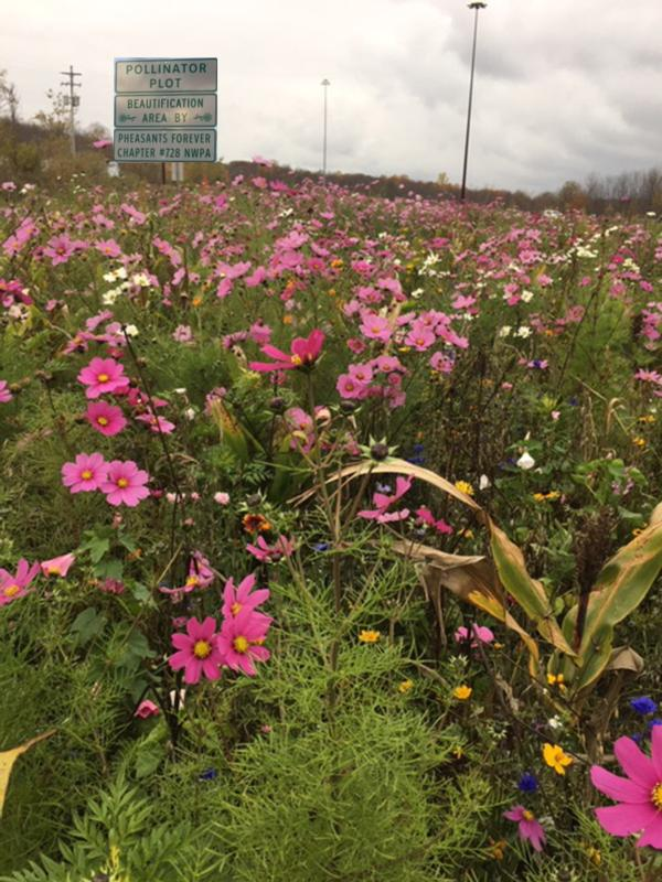 Route 8 Pollinator Project