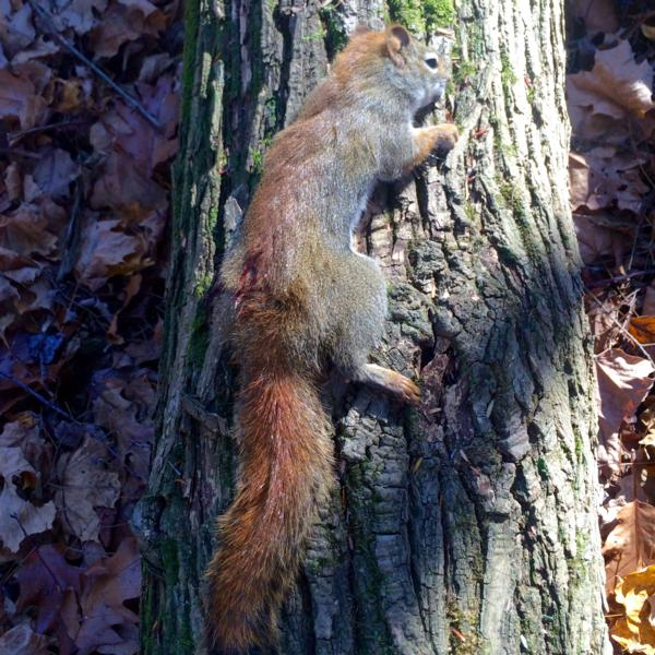 The Squirrel Master strikes again. Undisclosed location in Erie County.