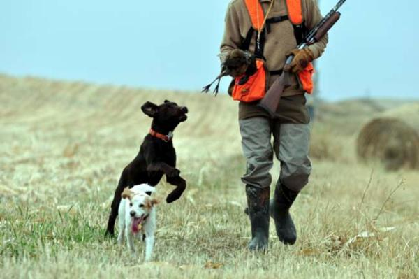 Minnesota pheasant hunting season opens with a bang!