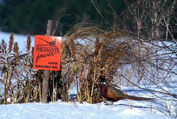 South Dakota Prairie Hills Pheasants Forever - Habitat Page