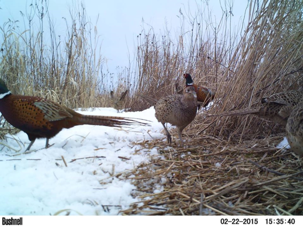 About Seneca County Pheasants Forever