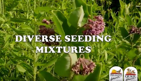 Tips of the Week: Diverse Seeding Mixtures