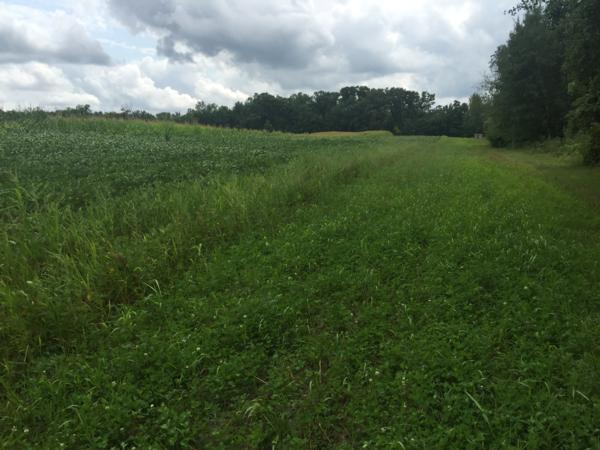 Habitat - Food Plots